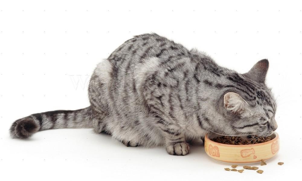 mancare uscata pentru pisici