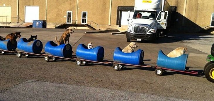 Trenuleti pentru caini fara stapan