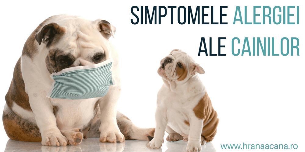 Simptomele alergiei ale cainilor
